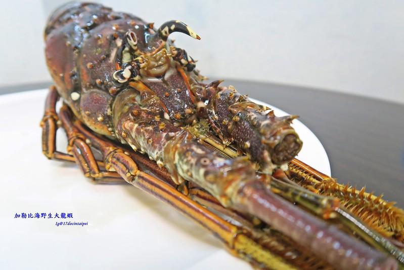 加勒比海野生大龍蝦-龍蝦美食-17度c隨拍 (4)