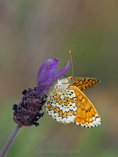 SN-Tres-del-cinco-dosmildiecisiete-En-las-Mariposas-Metilaea-setentaiséis-mejorada-Web