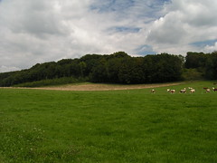 20070831 11977 0707 Jakobus Wald Wiese Kühe Wolken
