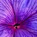 Purple flower porn 👀 by egotoagrimi
