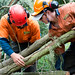 Tree Access 2