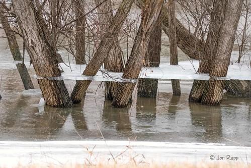 Ice Skirts Around Trees 1a (EB)