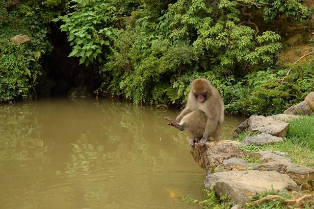 嵐山モンキーパークいわたやま - Arashiyama Monkey Park Iwatayama