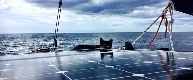 Boatcat. Solar panels. Ocean.