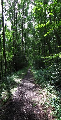 20140803 01 192 Jakobus Wald Weg Bäume Eisenbahngleise_P01
