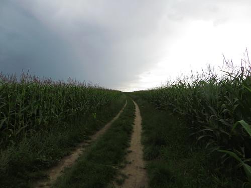 20140804 02 501 Jakobus Weg Maisfelder