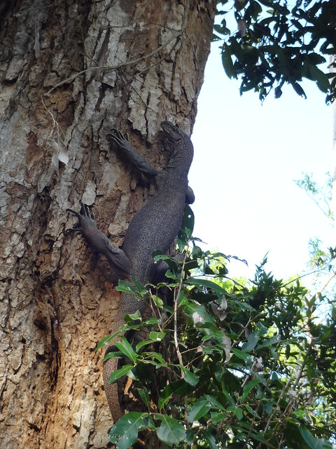 Monitors climbing trees, yikes, Sony DSC-WX150
