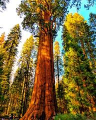 SequoiaGeneralSherman