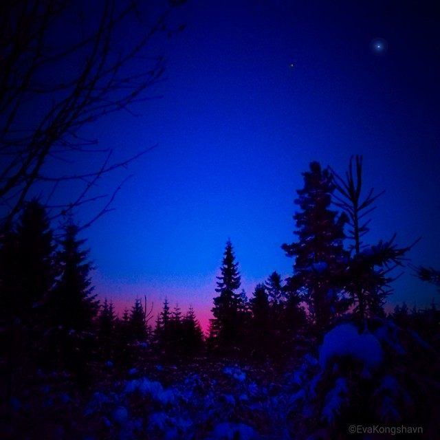Silhouettes in blue hour
