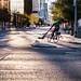 Urban Bike Trail