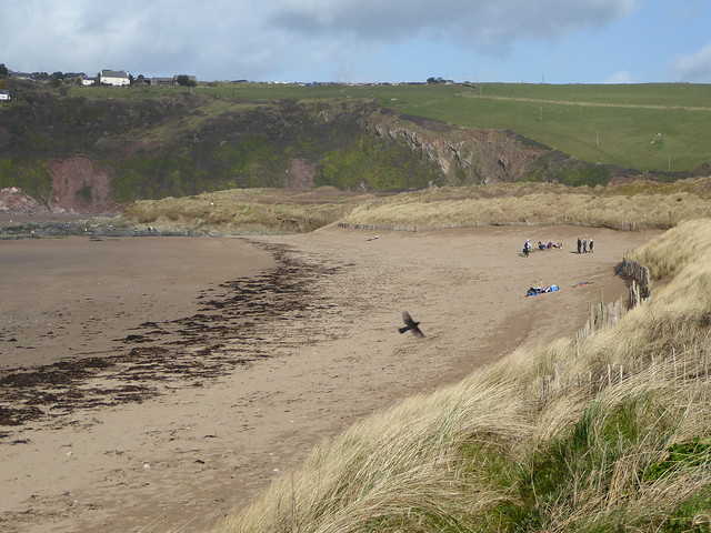 The dunes and strandline at Bantham Beach