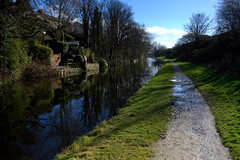 Sunlit walk by the canal
