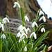 Limpsfield Churchyard Surrey