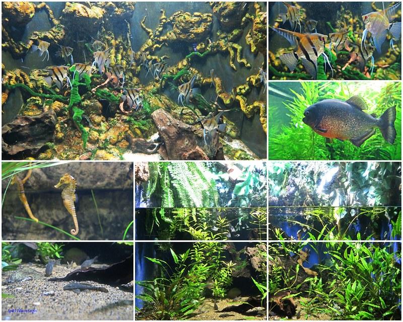 SEALIFELondon Aquarium-KLOOK客路-17docintaipei (18)