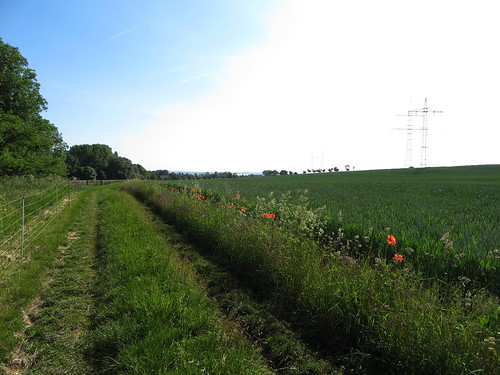 20170601 05 035 Regia Wald Weg Feld Baum Mohn Blume rot