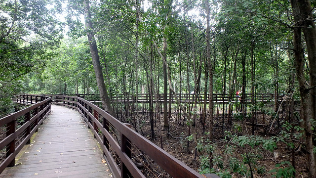 Pasir Ris Mangrove Boardwalk