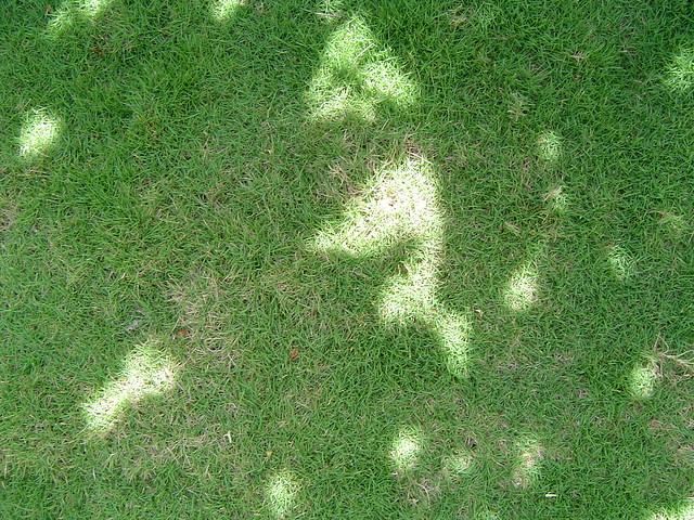 Grass - 2007, Sony DSC-P72