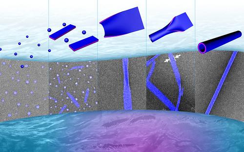 Peptoid Nanotubes