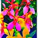 Colourful Thai orchids run through the photo app Waterlogue