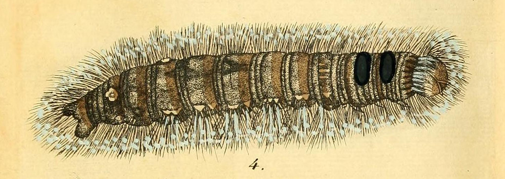 caterpillar-banner2