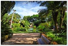 Teich 'Botanischen Garten'