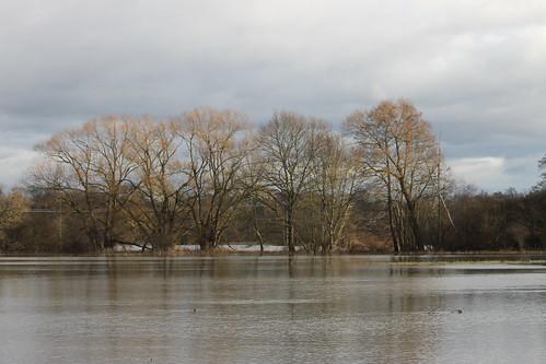 Les inondations du Ried en hiver