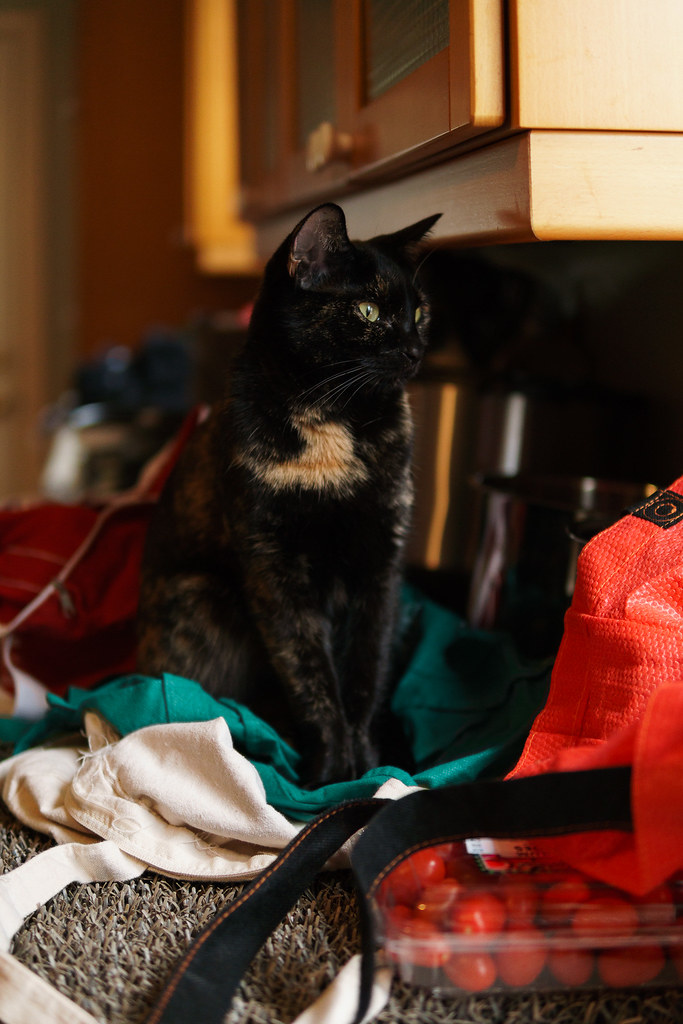 Our tortoiseshell cat Trixie stands amongst the groceries on the kitchen counter