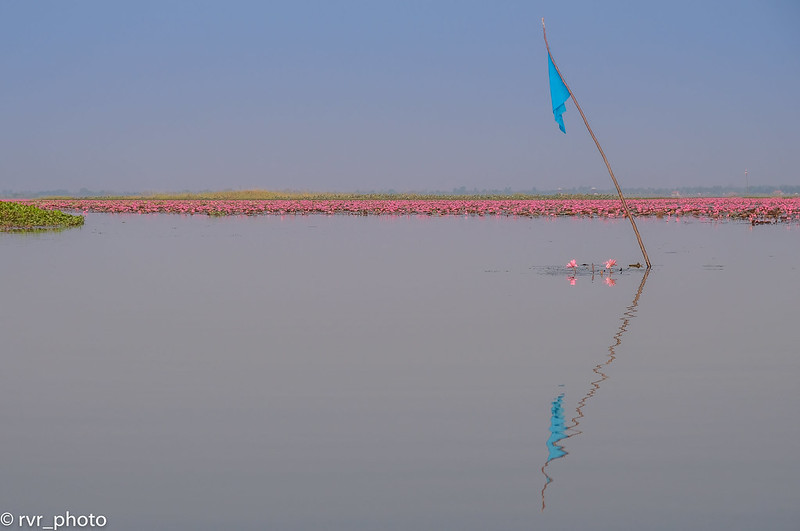 Red Lotus Lake, Udon Thani, Tailandia