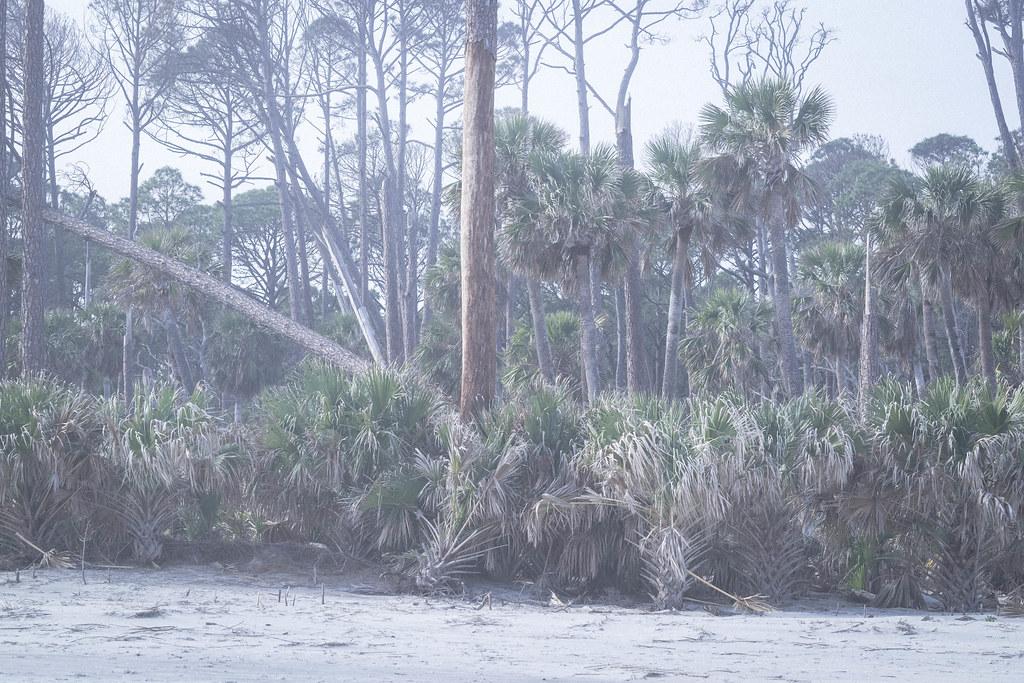 Hunting Island, SC_DSF1211