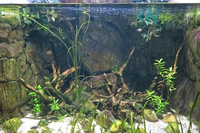 SEALIFELondon Aquarium-KLOOK客路-17docintaipei (19)