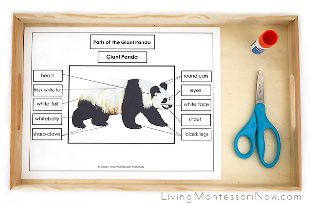 Tray with Parts of the Giant Panda Activity