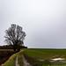 Bedfordshire Fields
