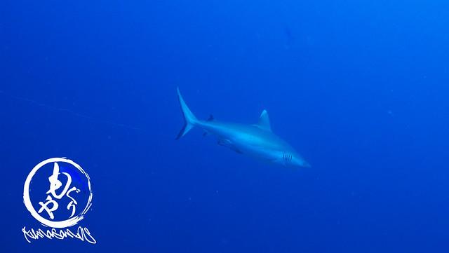 ここでもいっぱいサメみれました♪