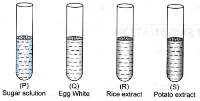 ncert-class-9-science-lab-manual-food-sample-test-for-starch-and-adulteration-5