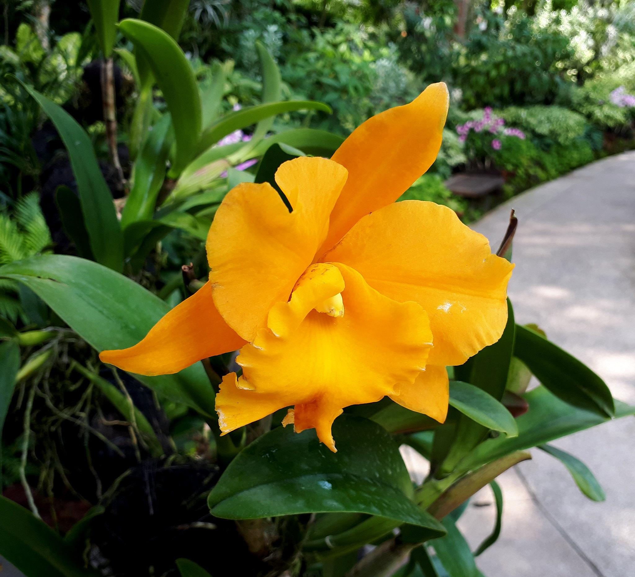 Singapore botanical garden 40415852561_84ed84c291_k