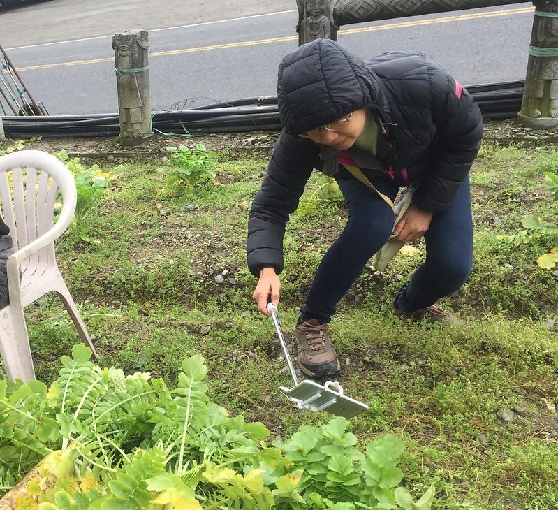 福山農場 高麗菜 (6)