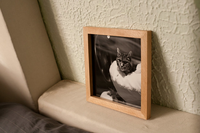 photo of a photo in a frame