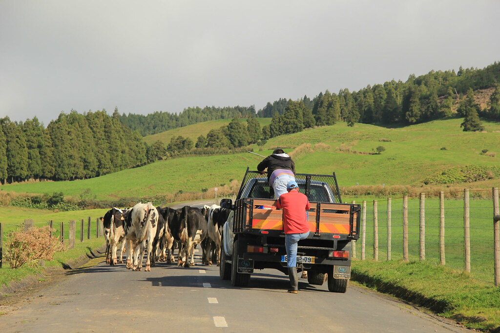 Traffic jams in the Azores