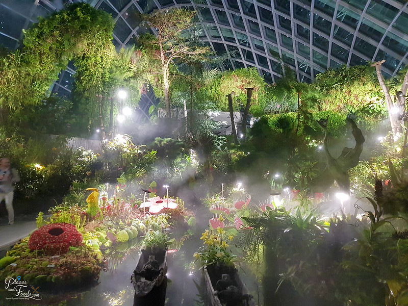 cloud forest night