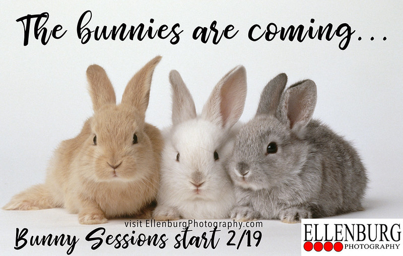 Book a Bunny Session