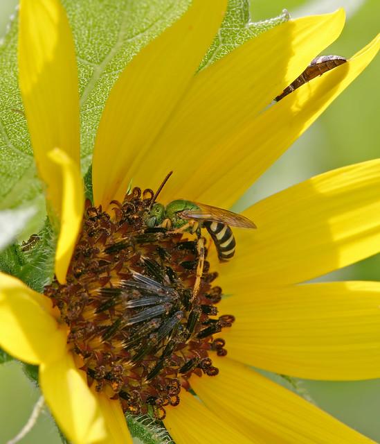 Bugs_7-10-2005-20D_6433