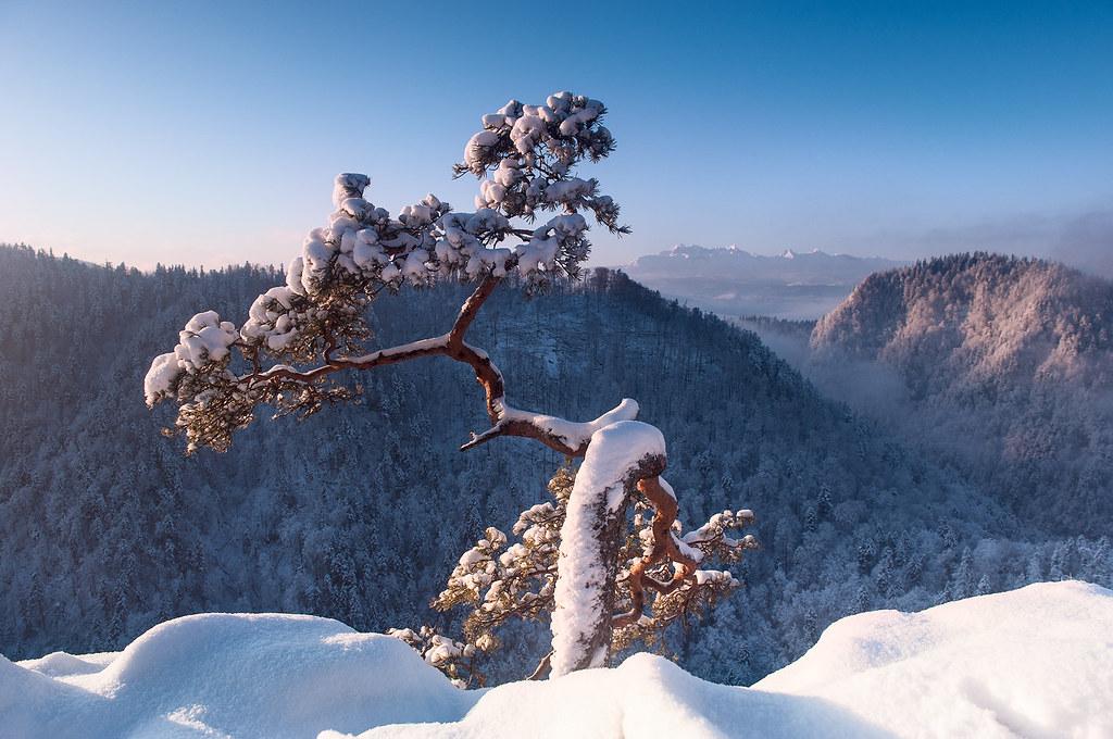Sokolica winter