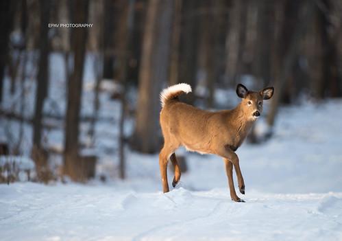 Prancing through the snow!