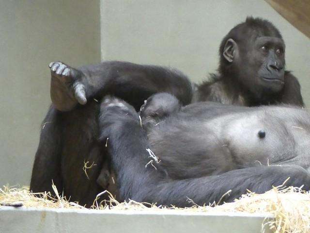 Tonda und sein Geschwisterchen, Wilhelma