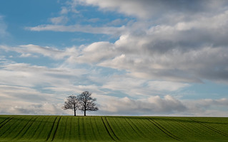 Two Trees | by Paul Kaye