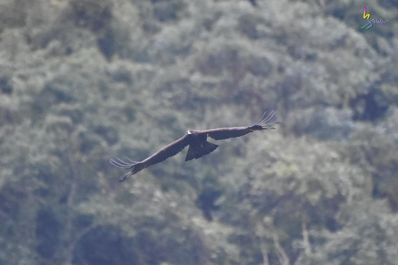 Black_Eagle_7004