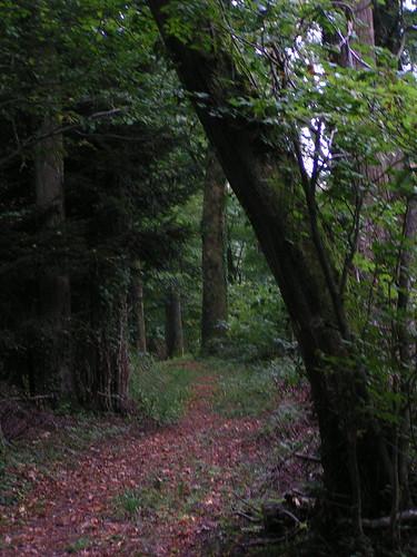 20070829 11523 0705 Jakobus Wald Weg