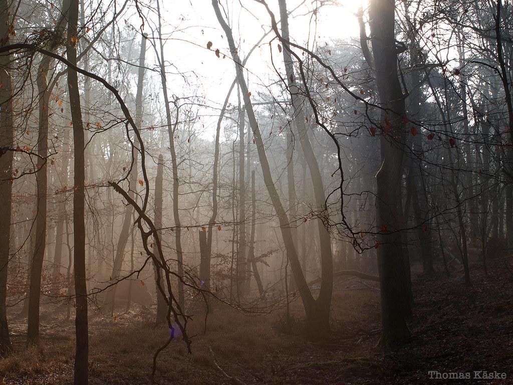 Walddunst