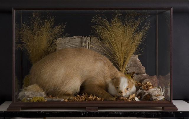 Stuffed, Pickled and Pinned: Wonders of Nature from Welsh Museum