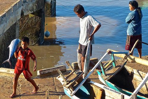 Big catch! Fishing harbour Pero, Sumba Barat Daya